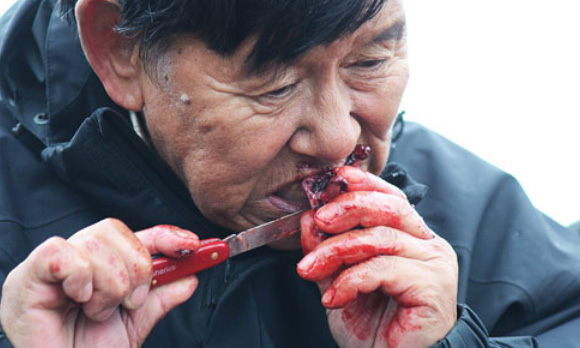 eating seal meat