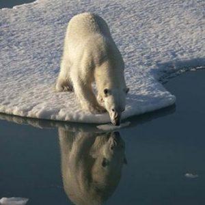 iso arctic mirror group