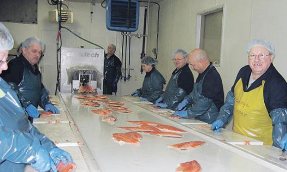 processing salmon