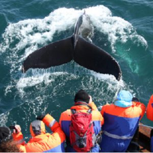 iceland's whale of a marine industry