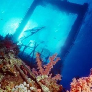 wreck to reef