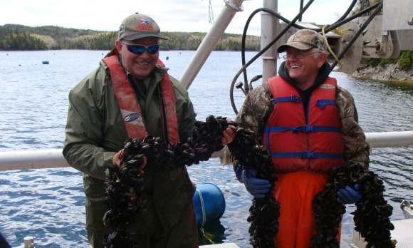 norlantic mussels